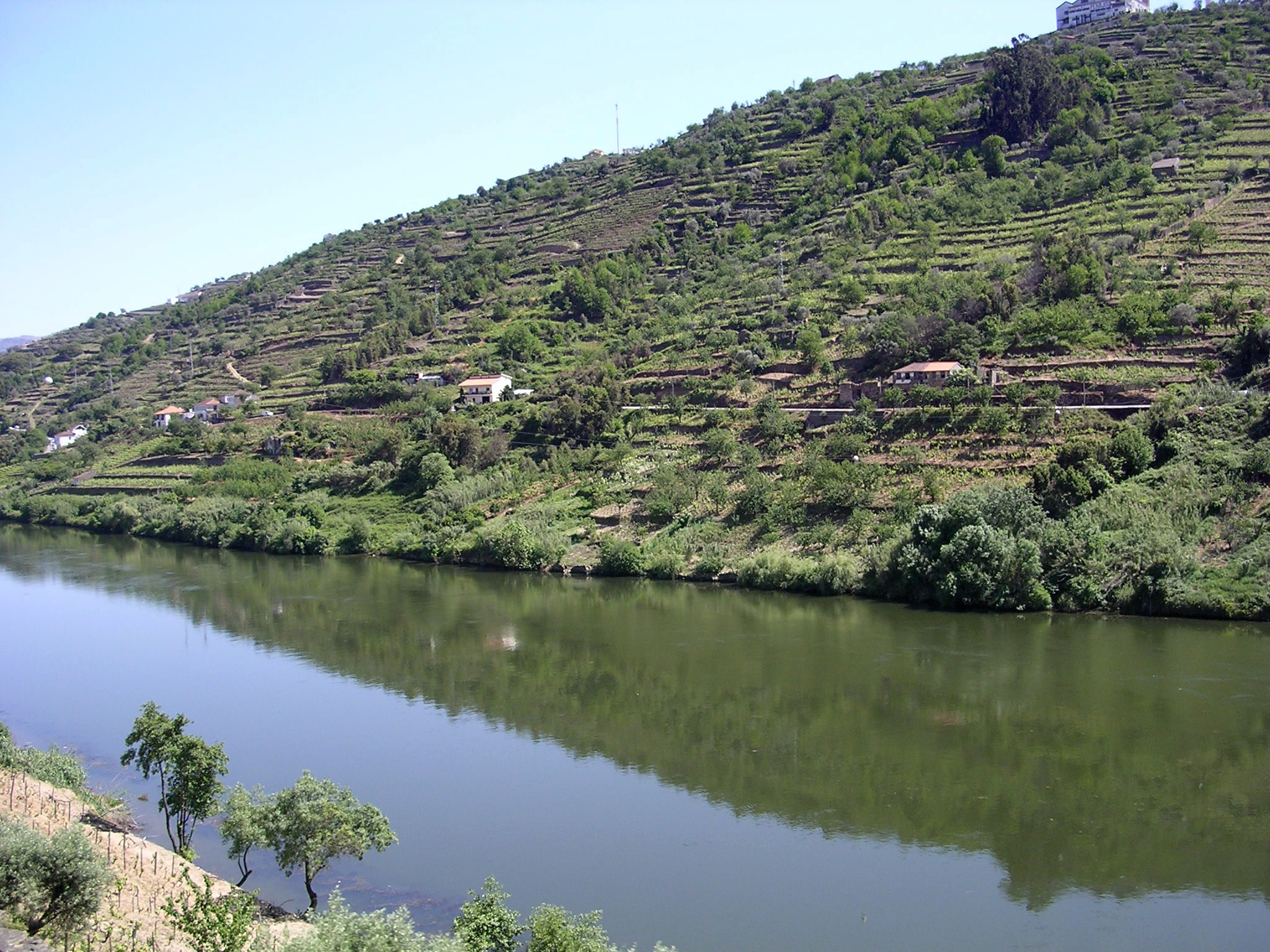 https://upload.wikimedia.org/wikipedia/commons/4/44/Douro-river-oliv.jpg