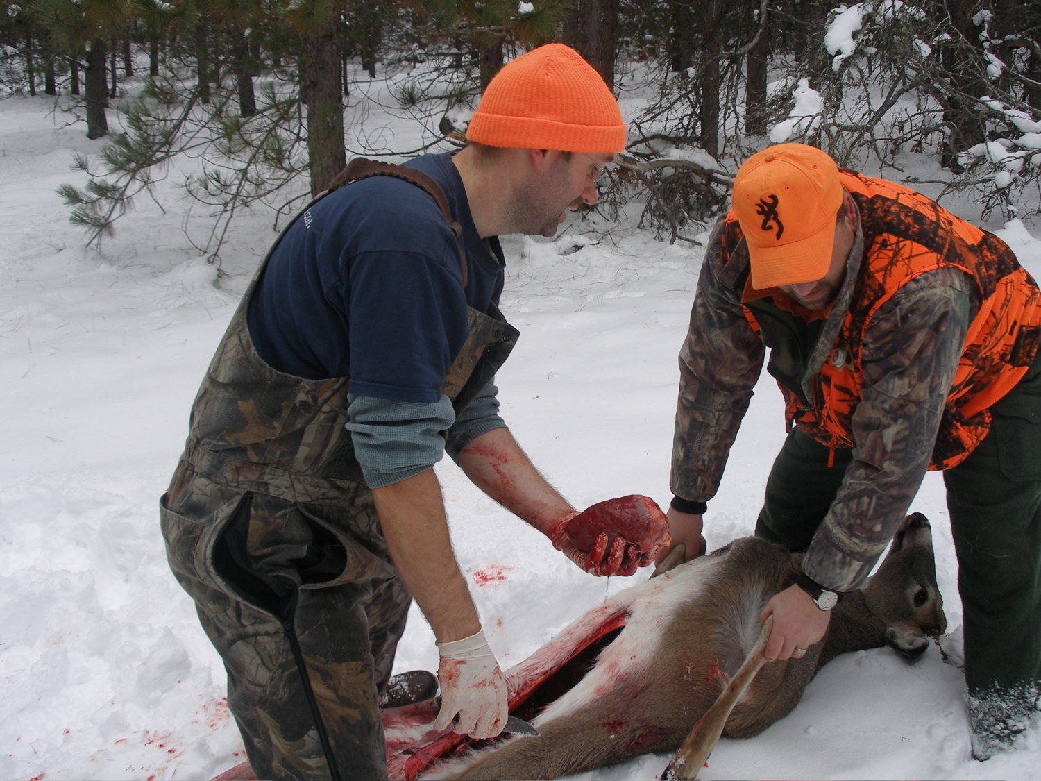 Field Dressing Whitetail Deer