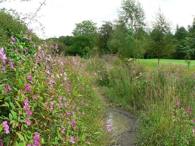 Footpath by Pudsey Beck - geograph.org.uk - 943369