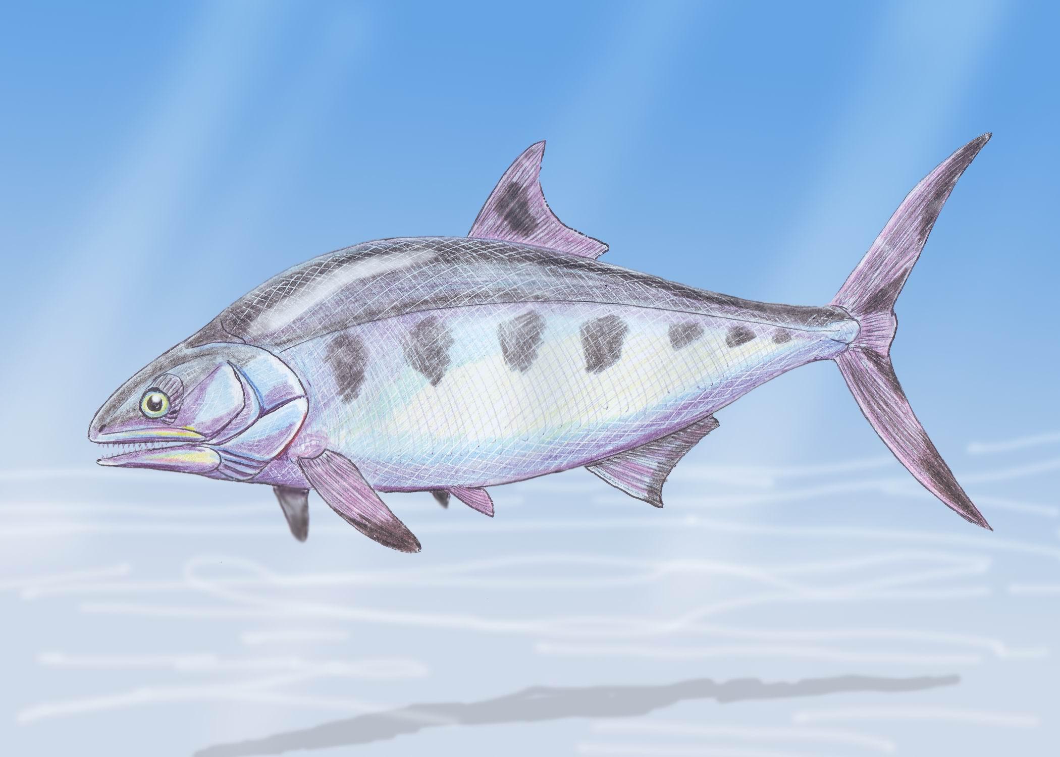 девушки эволюция рыбы картинки все белое