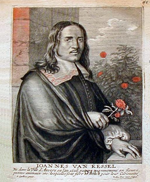Jan van Kessel the Elder - Wikipedia