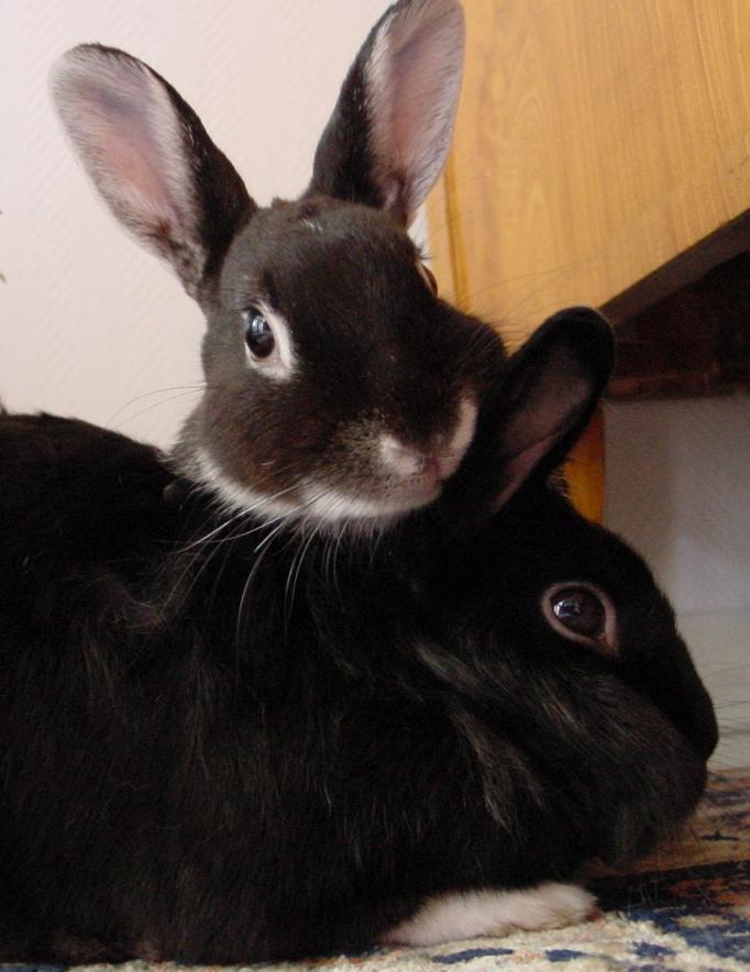 Beschreibung kaninchen sozial