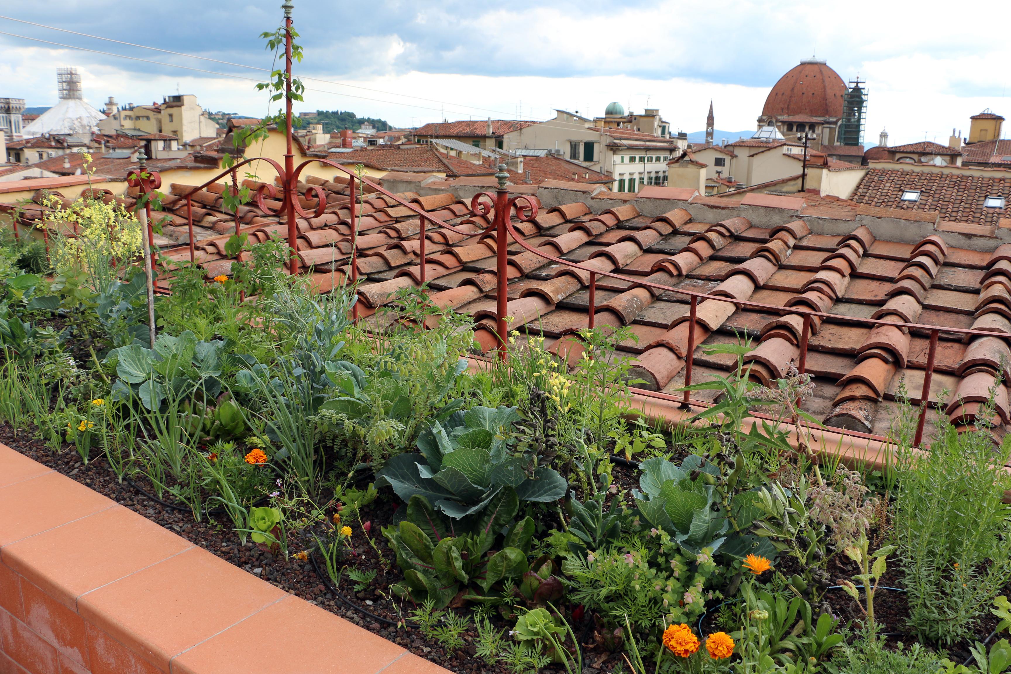 File:Palazzo pucci, corpo centrale, orti biologici sulla terrazza ...