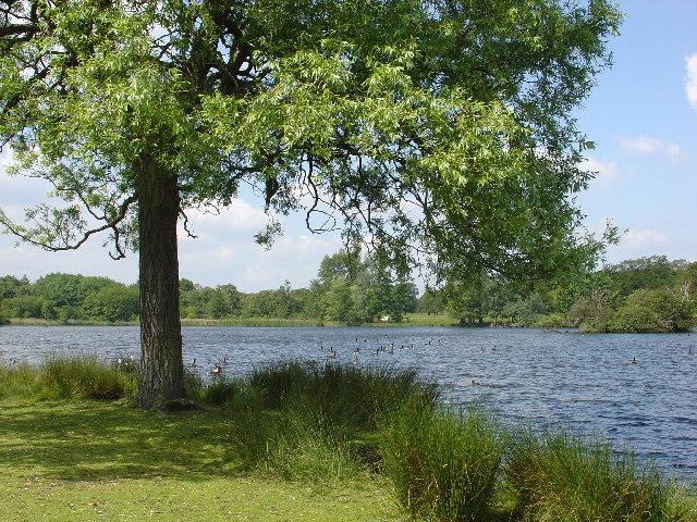 Pen Ponds, Richmond Park - geograph.org.uk - 17621