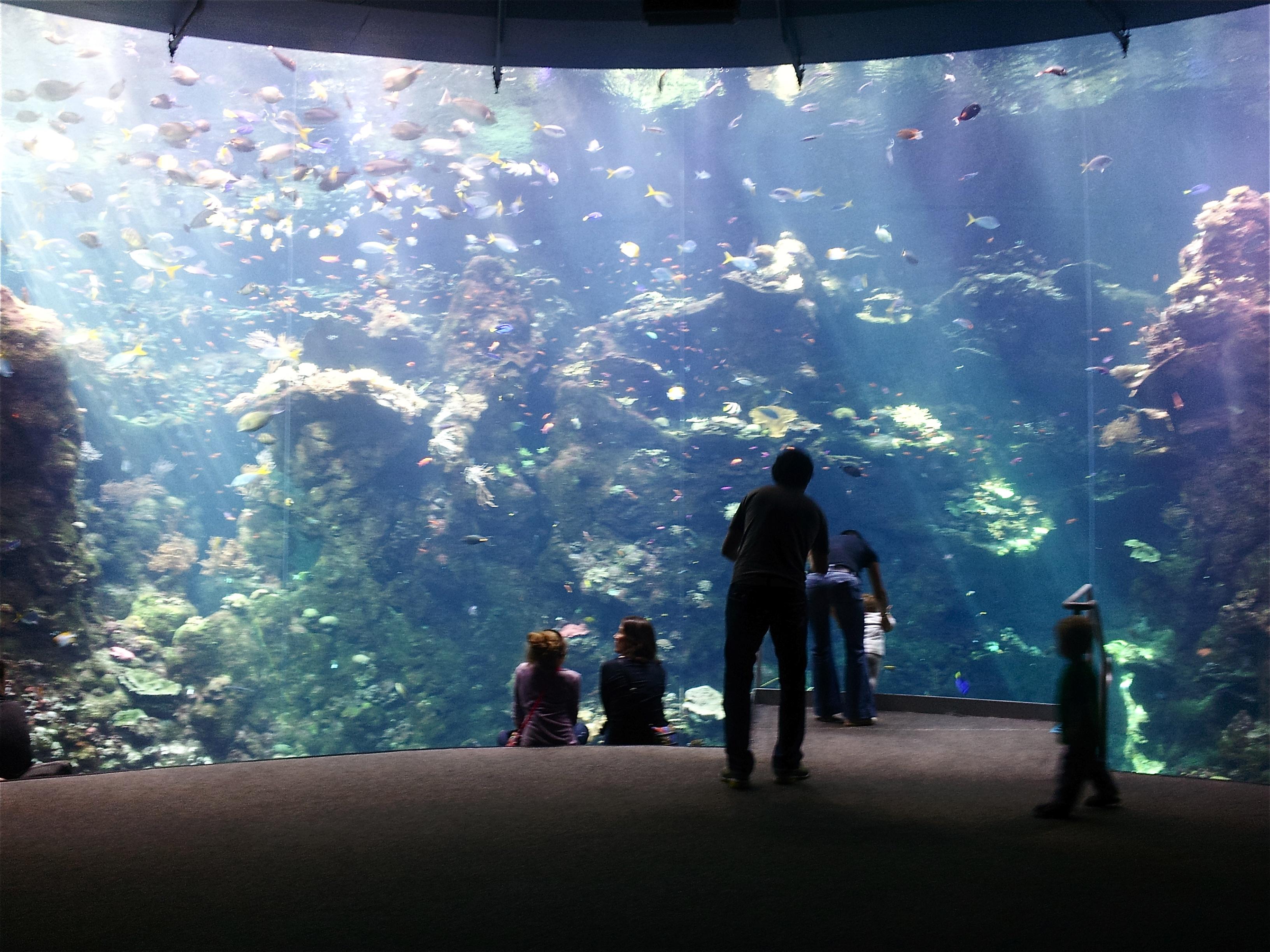 Aquarium In San Antonio Texas