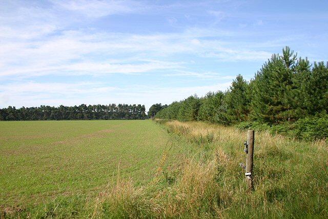 Redneck Heath, Thetford Forest - geograph.org.uk - 514443