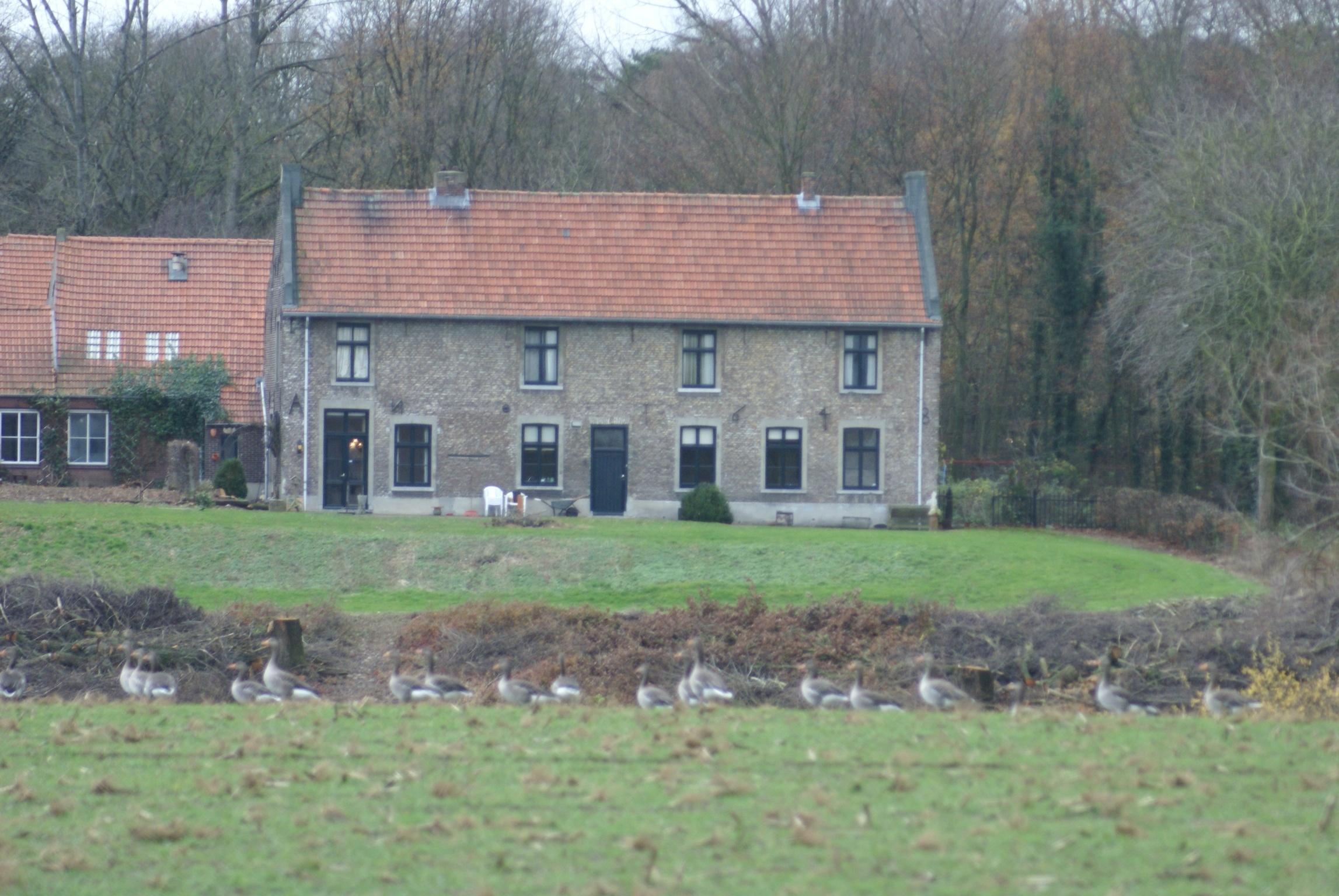 Een hoog huis met zadeldak tussen topgevels met vlechtingen in grubbenvorst monument - Tussen huis ...