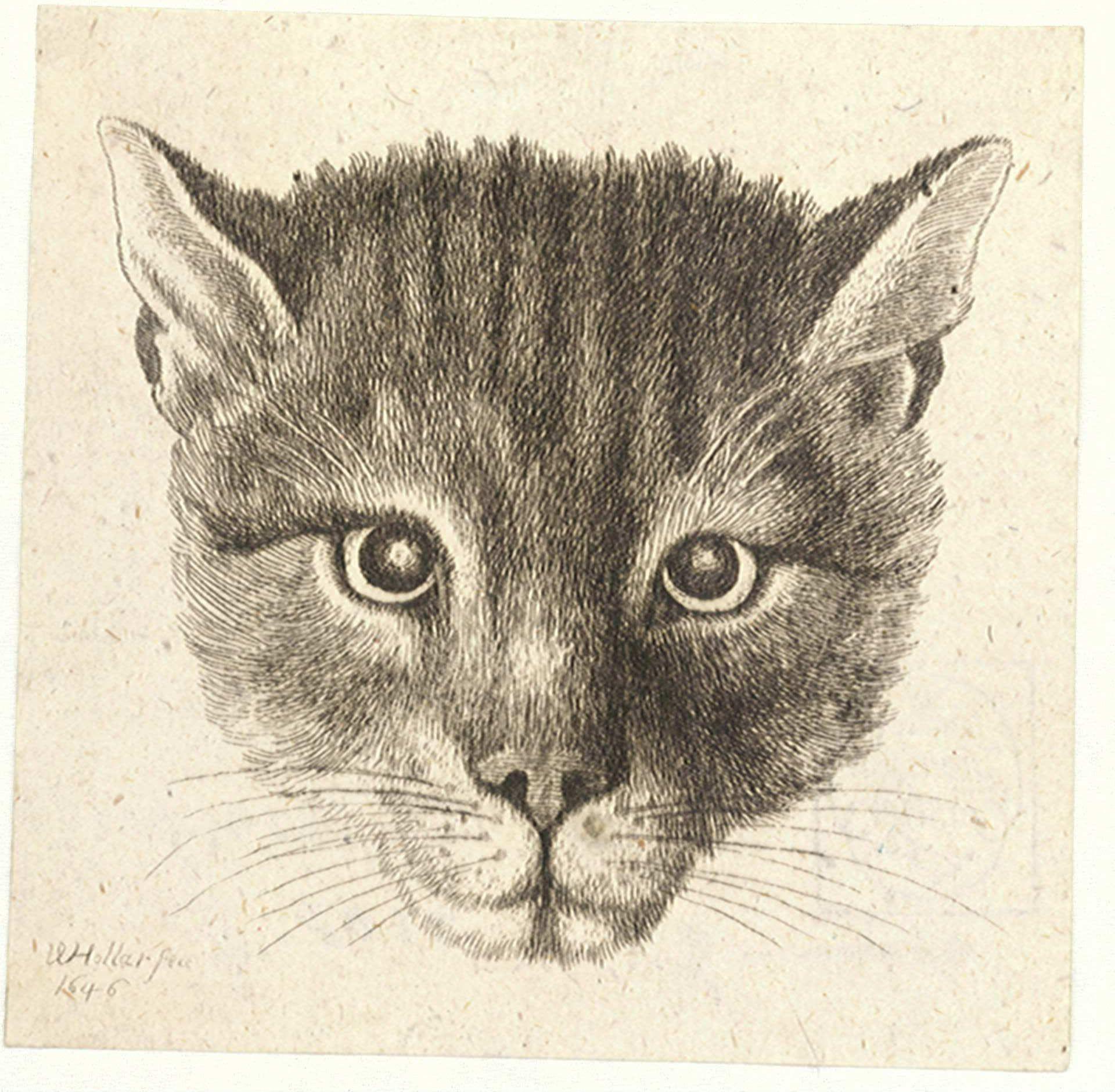 Kitty World: Small Kitten Pictures