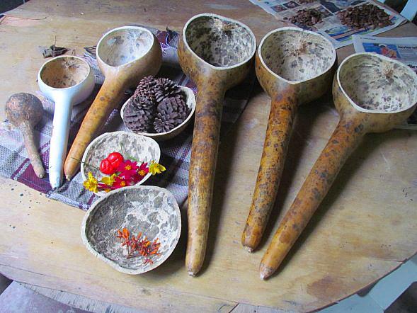 File:Why not nano - Lagenaria siceraria dipper gourd cucharón.jpg