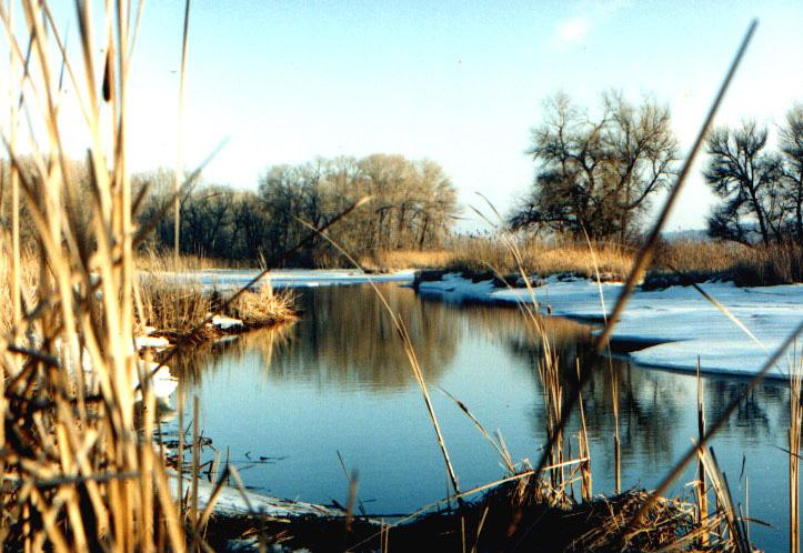 Рання весна в Таромському уступі. Дніпровсько-Орільський заповідник. Автор фото — Vadyum Manyuk (CC-BY-SA-4.0)