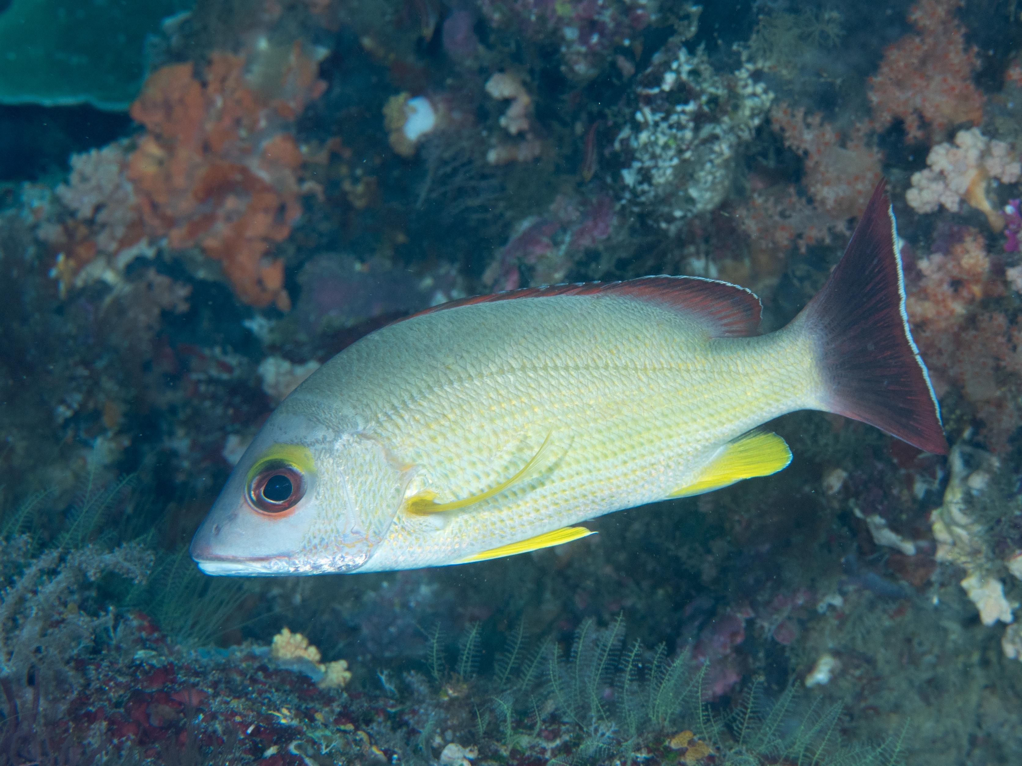 fiskarna dating Pisces kompatibilitet bra dating platser i Sydney