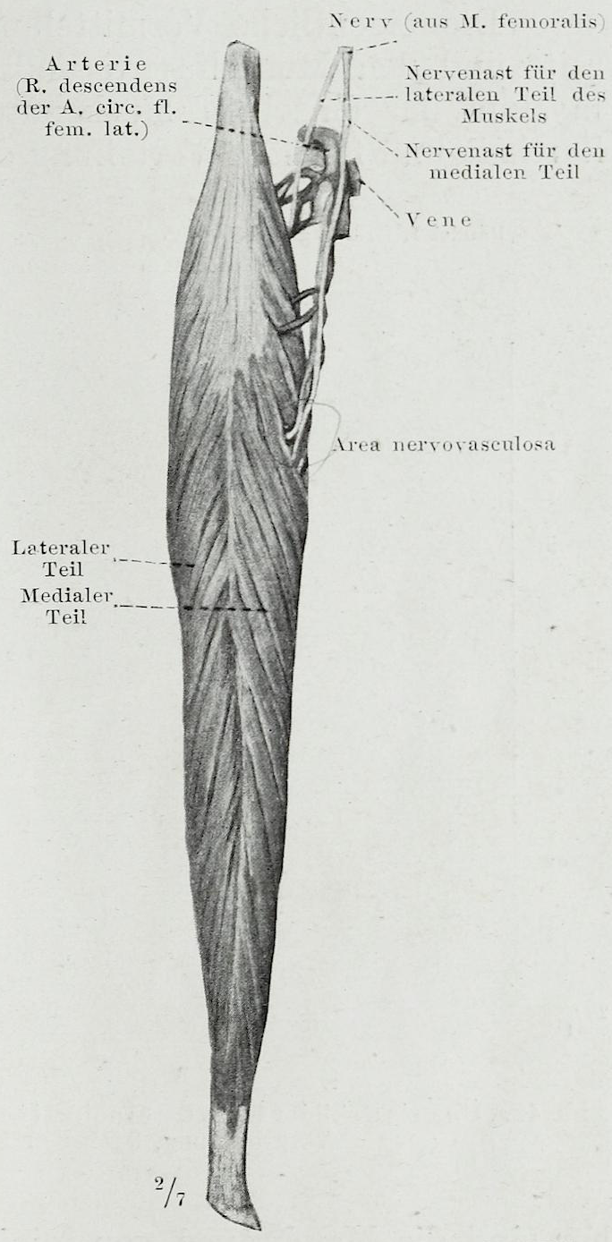 File:Braus 1921 41.png - Wikimedia Commons