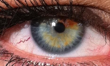 Eye Color Wikiwand