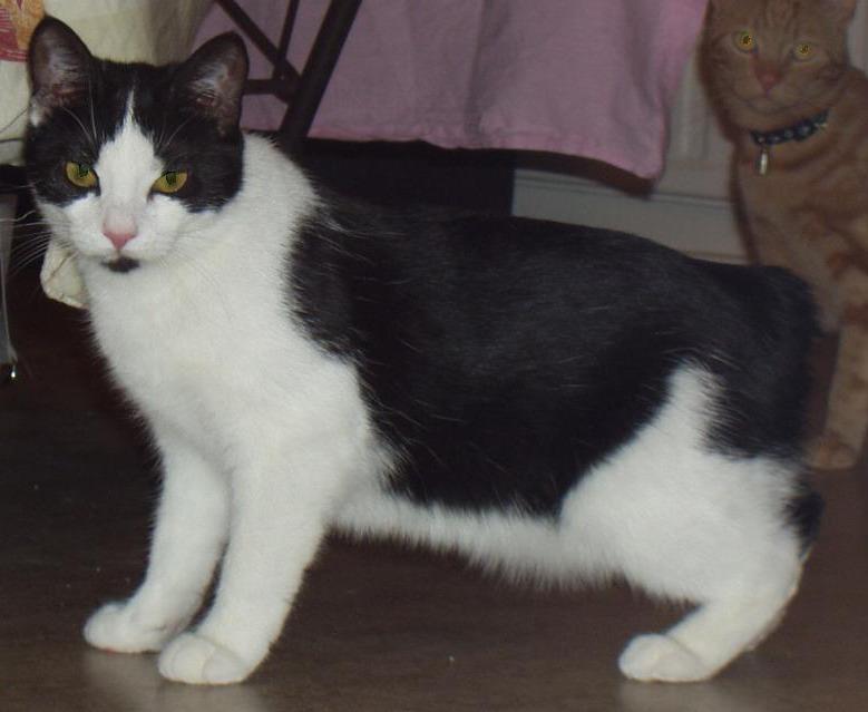 Rumpy Cat S Name