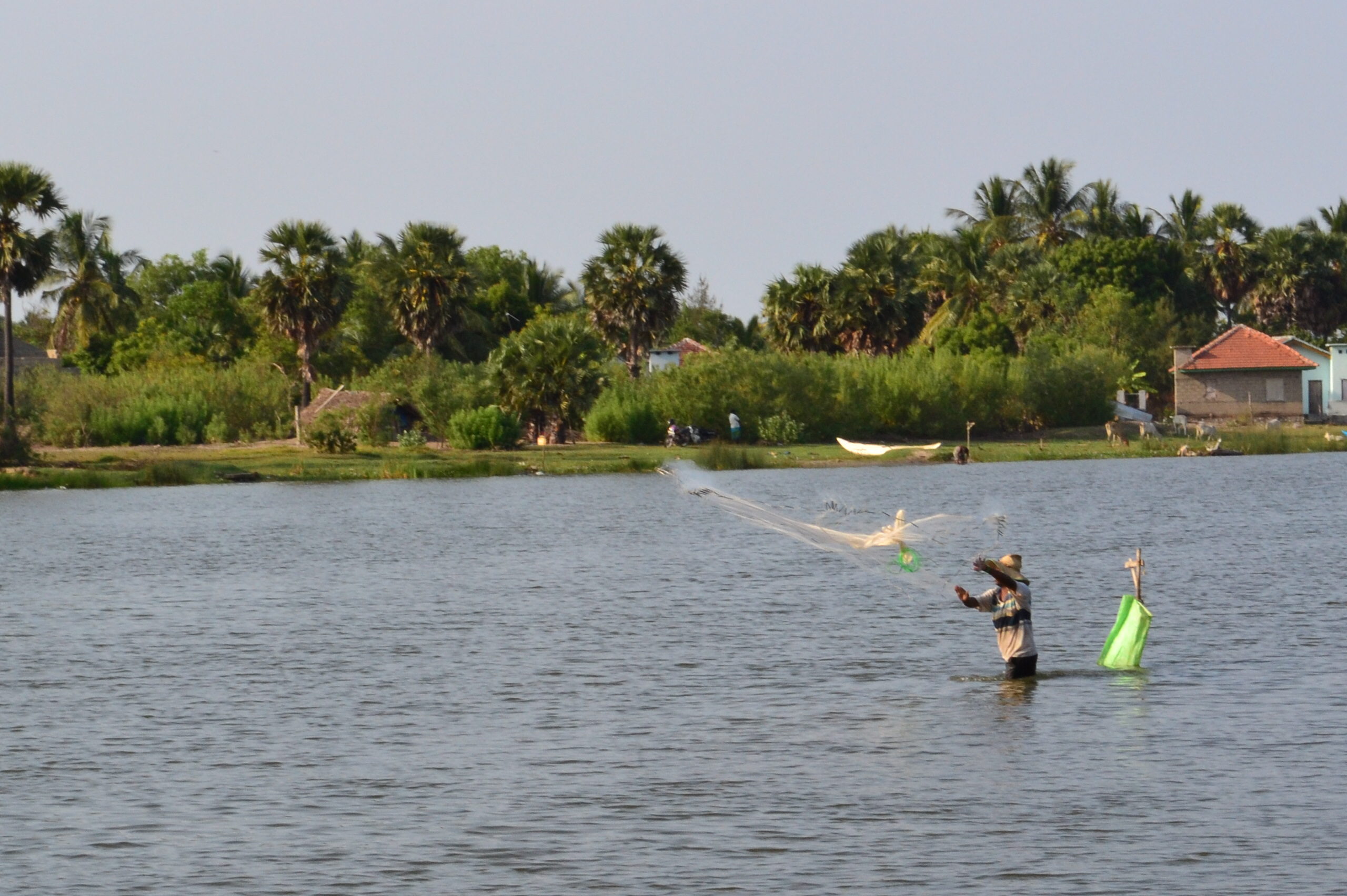 File fishing in pottuvil sri for Sri lanka fishing