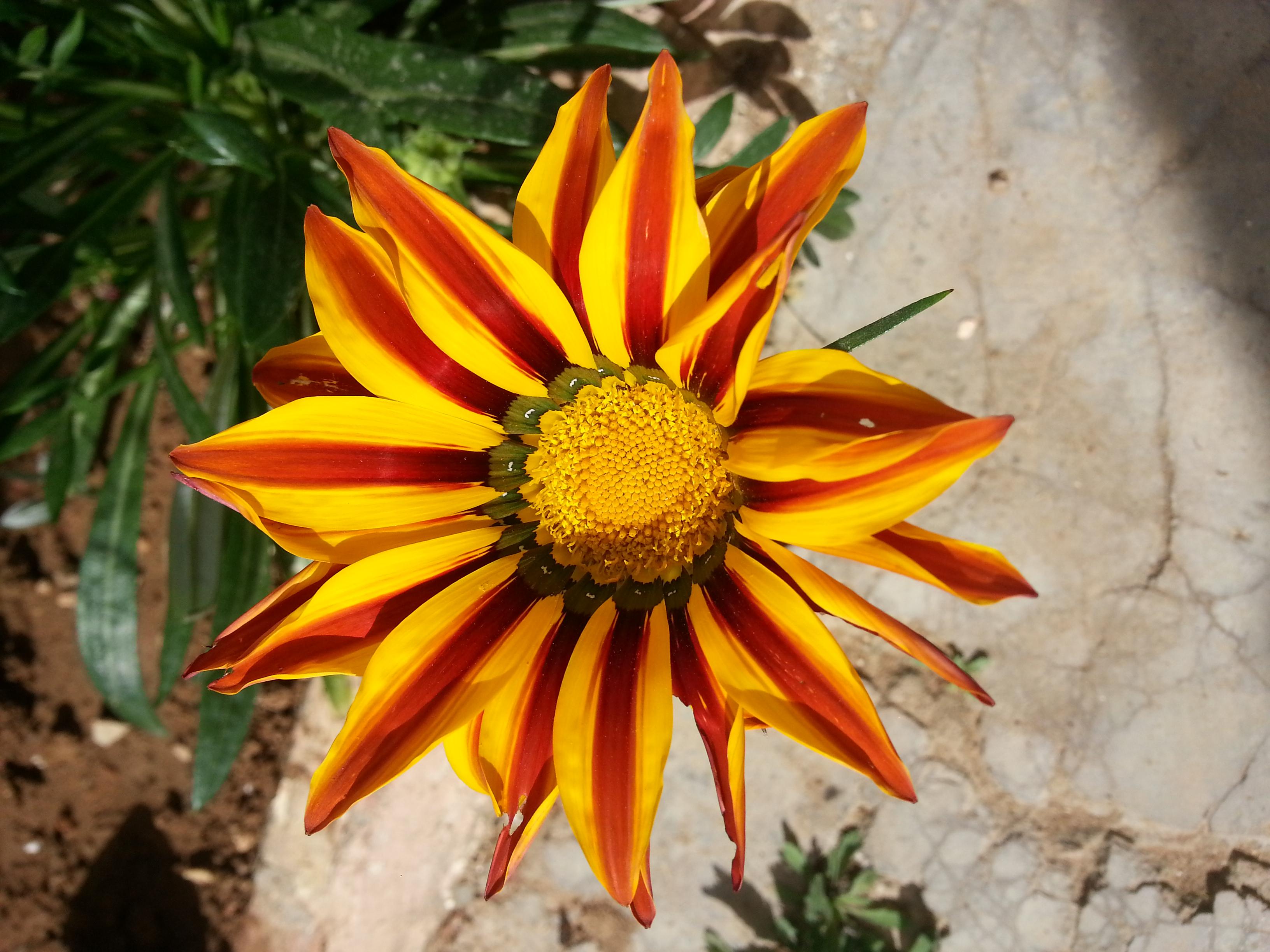 File Fleurs De Jardin 5 Jpg Wikimedia Commons