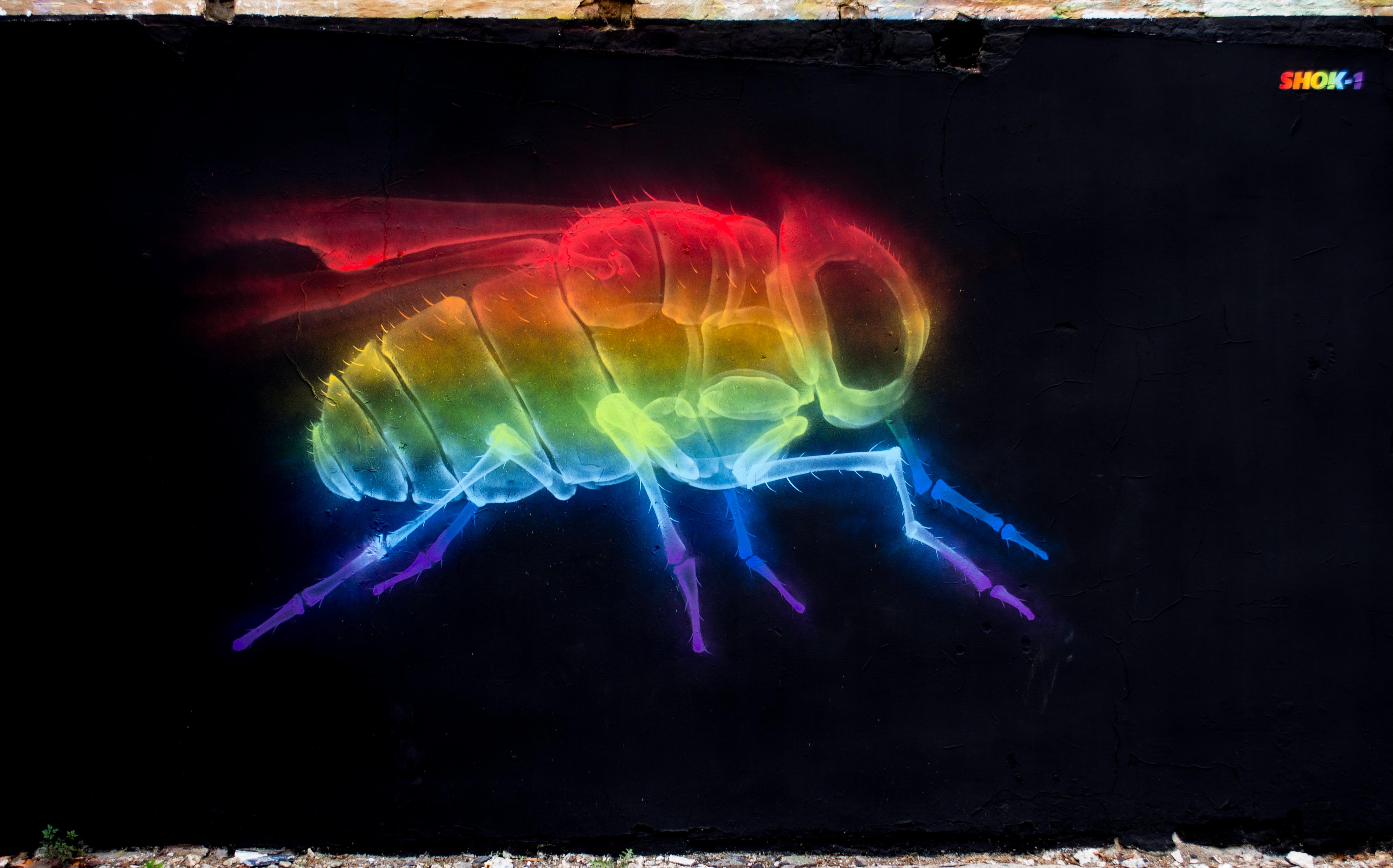 Filegraffiti in shoreditch london rainbow fly by shok1 9444356455 jpg