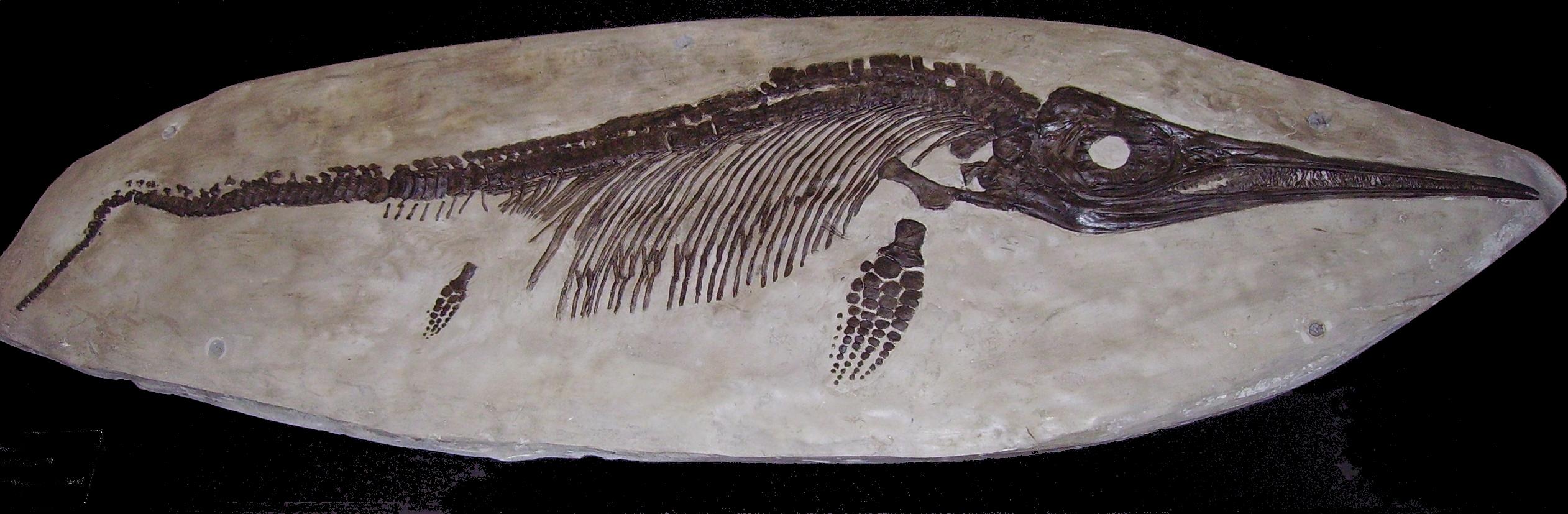 ichthyosaur fossil - photo #2