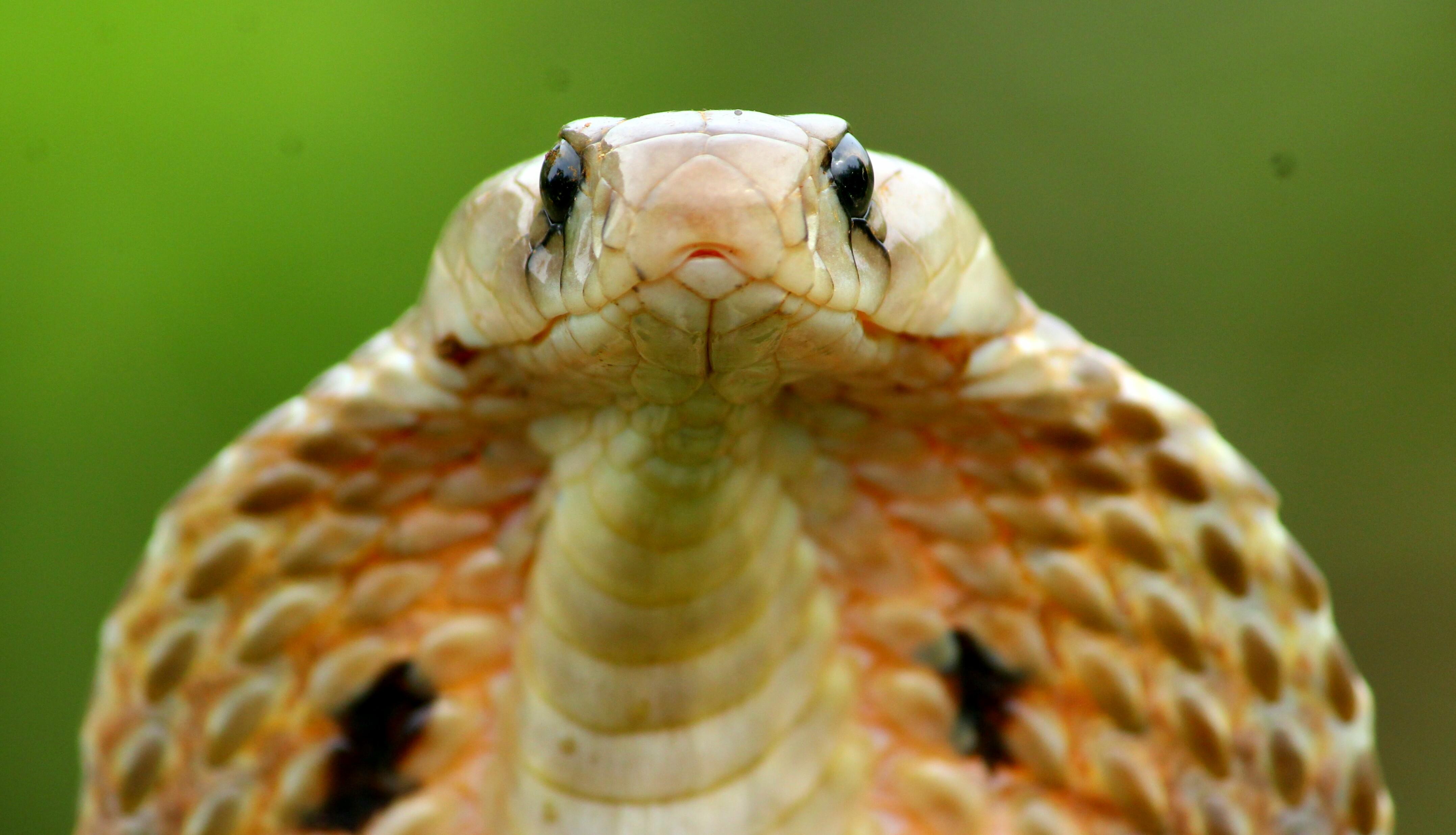 Nỗi sợ rắn[sửa | sửa mã nguồn]