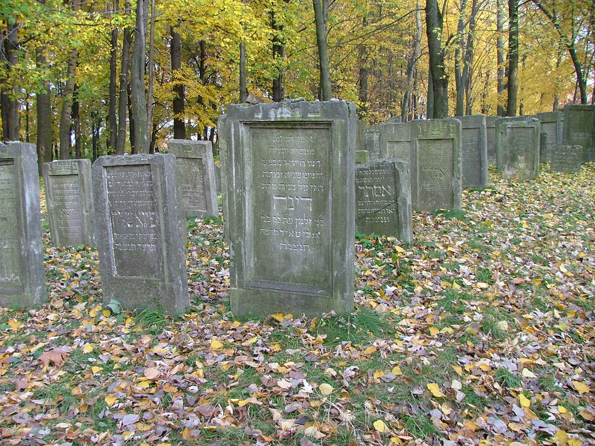 File:Jewish cemetery in Leżajsk (Poland)8.jpg - Wikimedia Commons