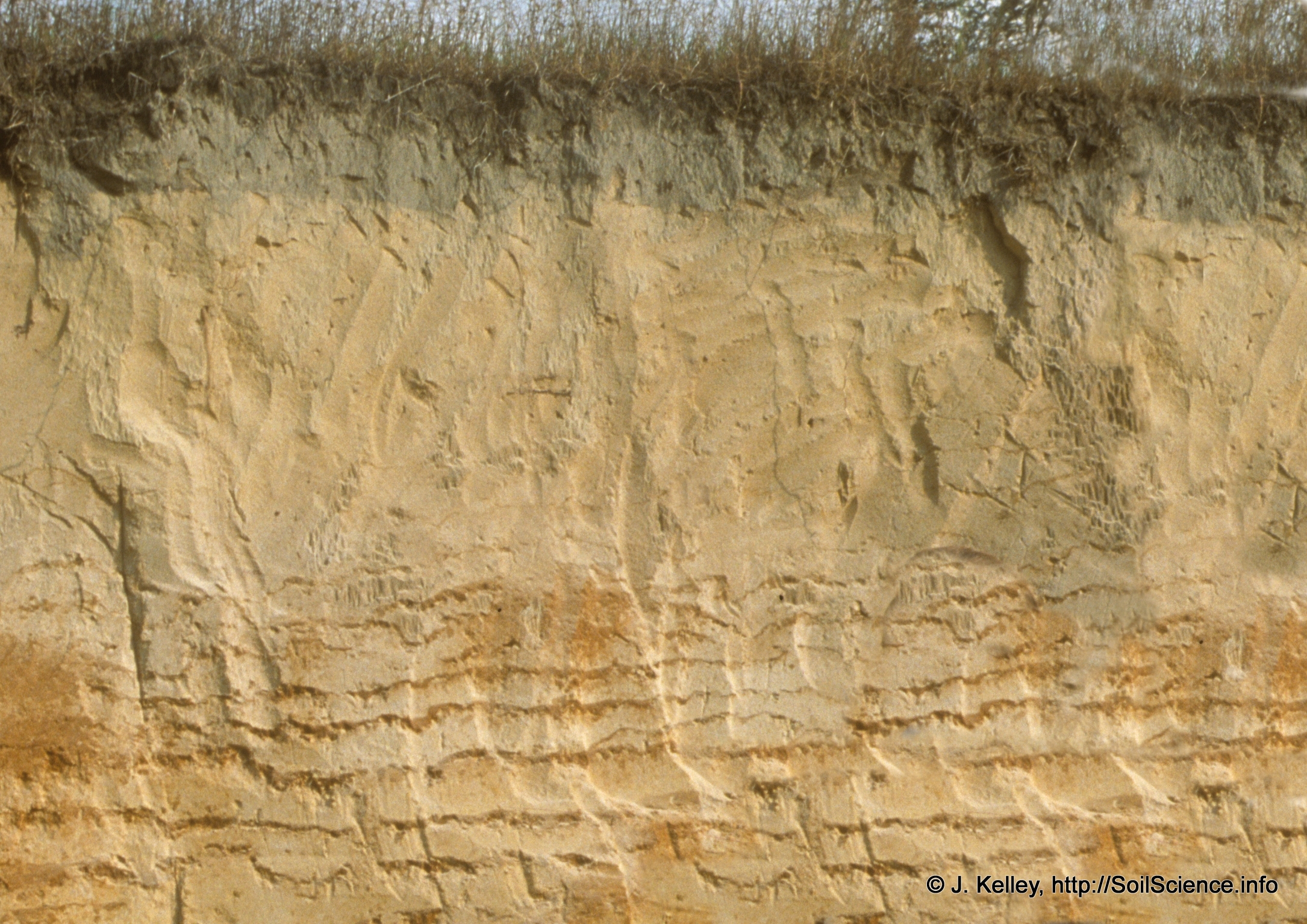 File lamella clay sandy wikipedia for Soil pictures and information