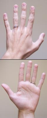 Fingers of the human left hand