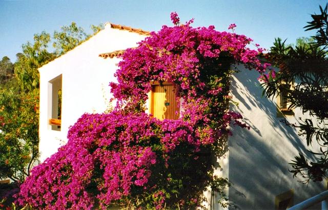 File:Mallorca - Appartments - Club - Europa - panoramio (1).jpg
