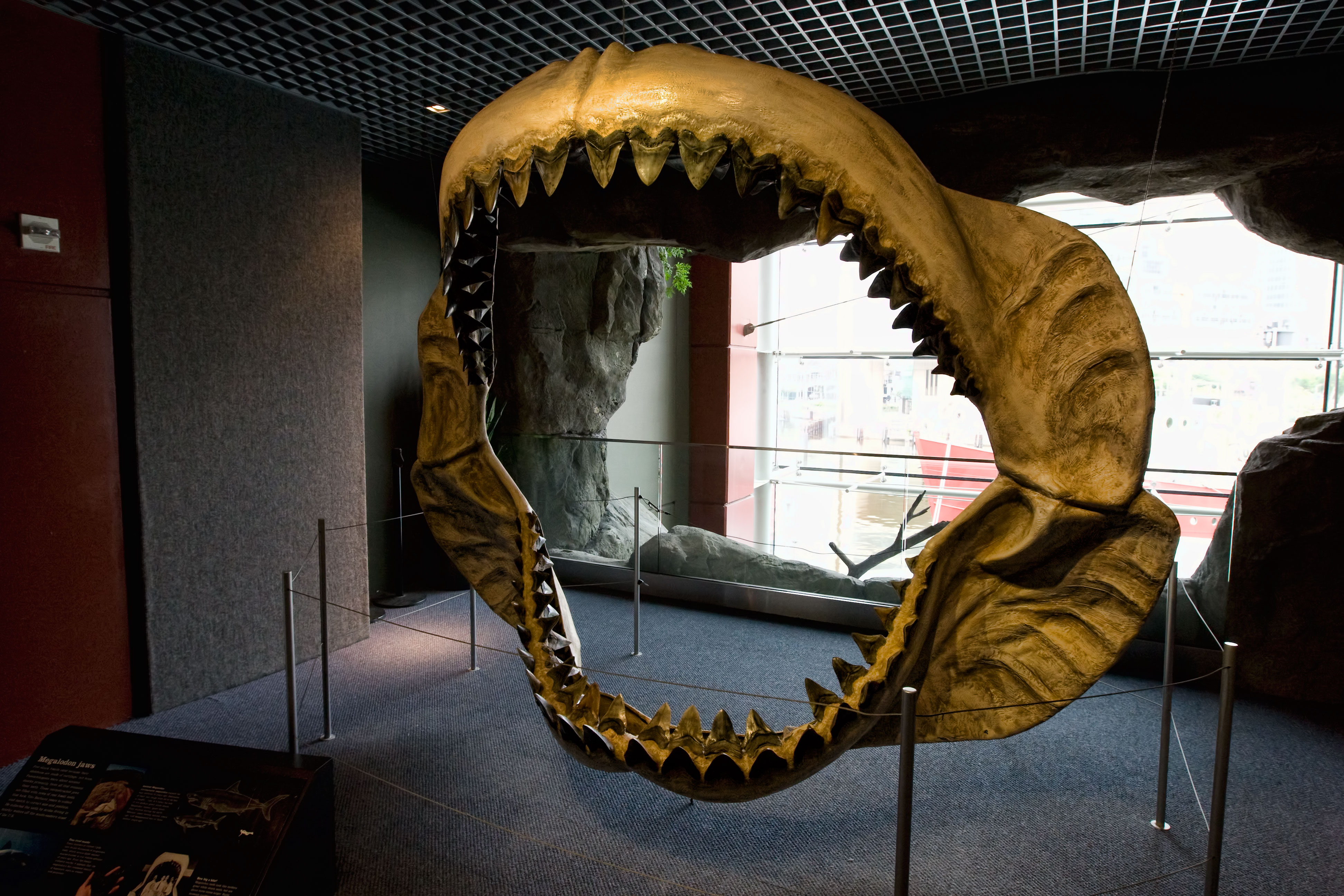 Megalodon-with-fake-bones
