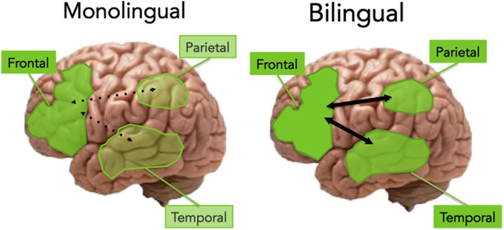 monolingualism vs bilingualism Indeed, we might be tempted to use this case as an example precisely for why we should argue for the advantage of bilingualism over monolingualism.