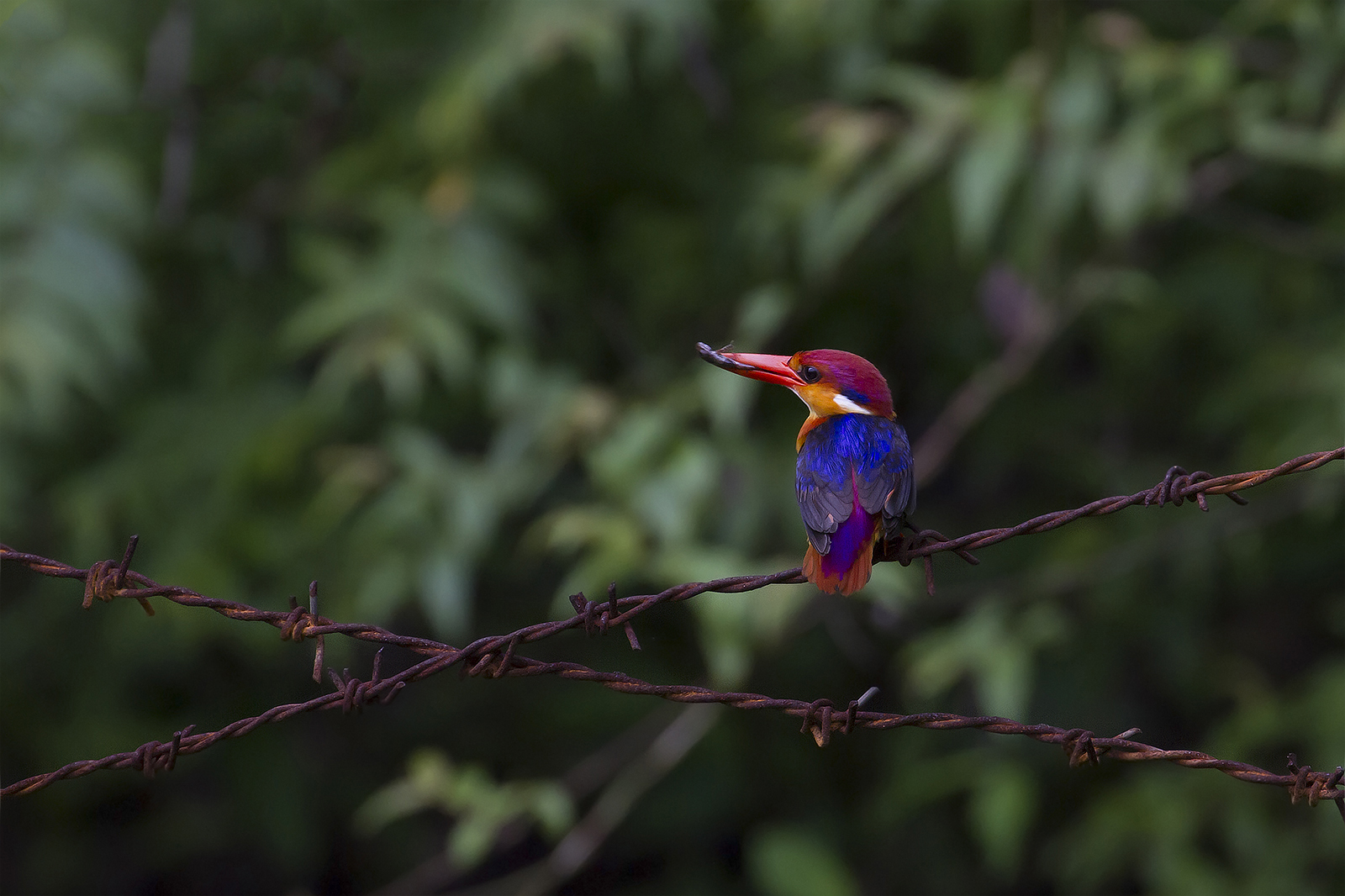 A bird in the National Park