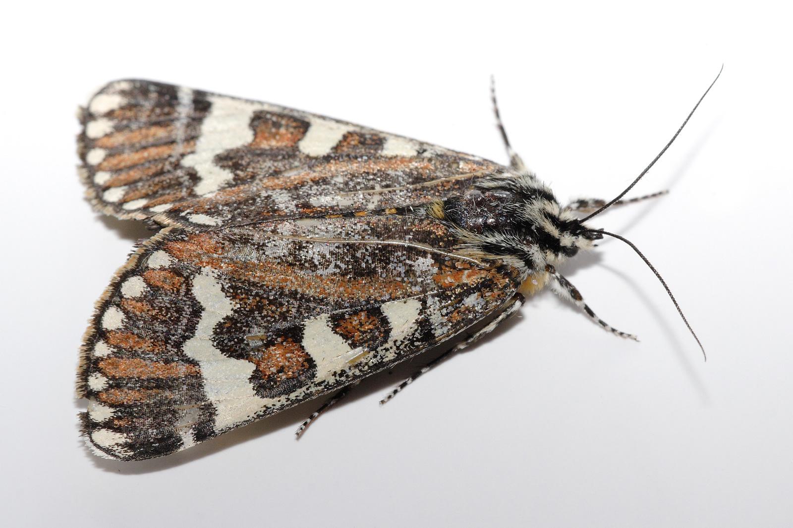 The Moths (short story)