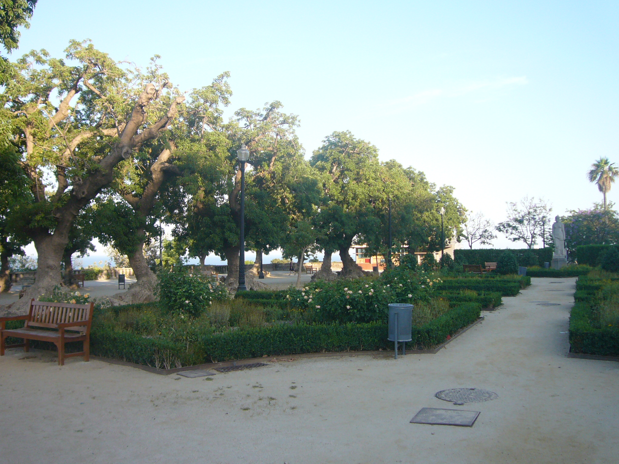 File phytolacca dioica trees jardins de miramar jpg for Jardin de miramar
