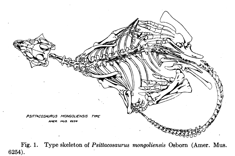File:Psittacosaurus mongoliensis type.png