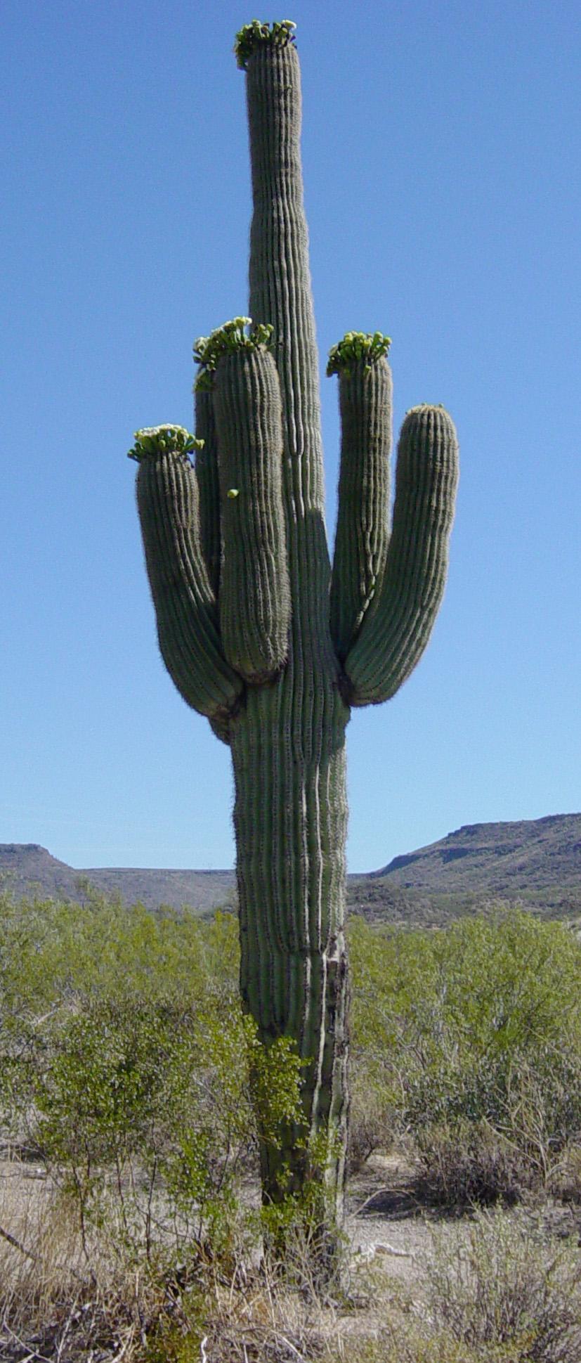 Hisoka's Contracts and Items Saguaro5763