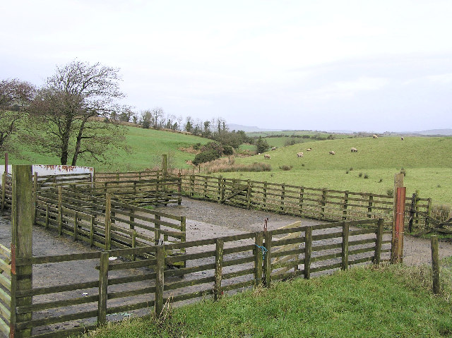Dog Pen For Inside House Ni Co Antrim