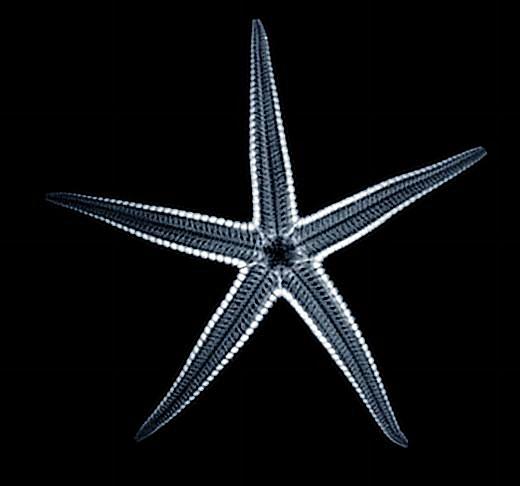Uma estrela do mar simples.