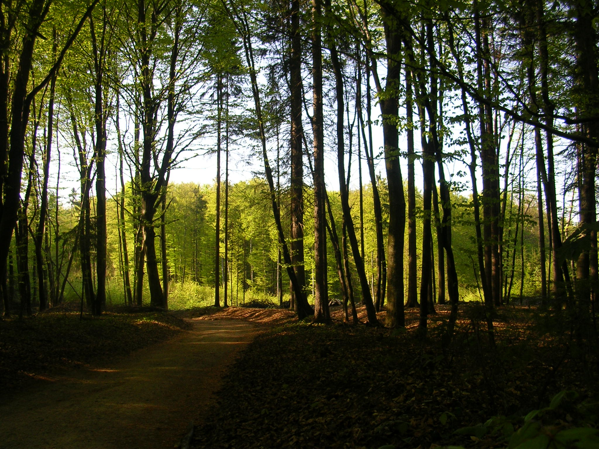 http://upload.wikimedia.org/wikipedia/commons/4/45/VG_forest.jpg