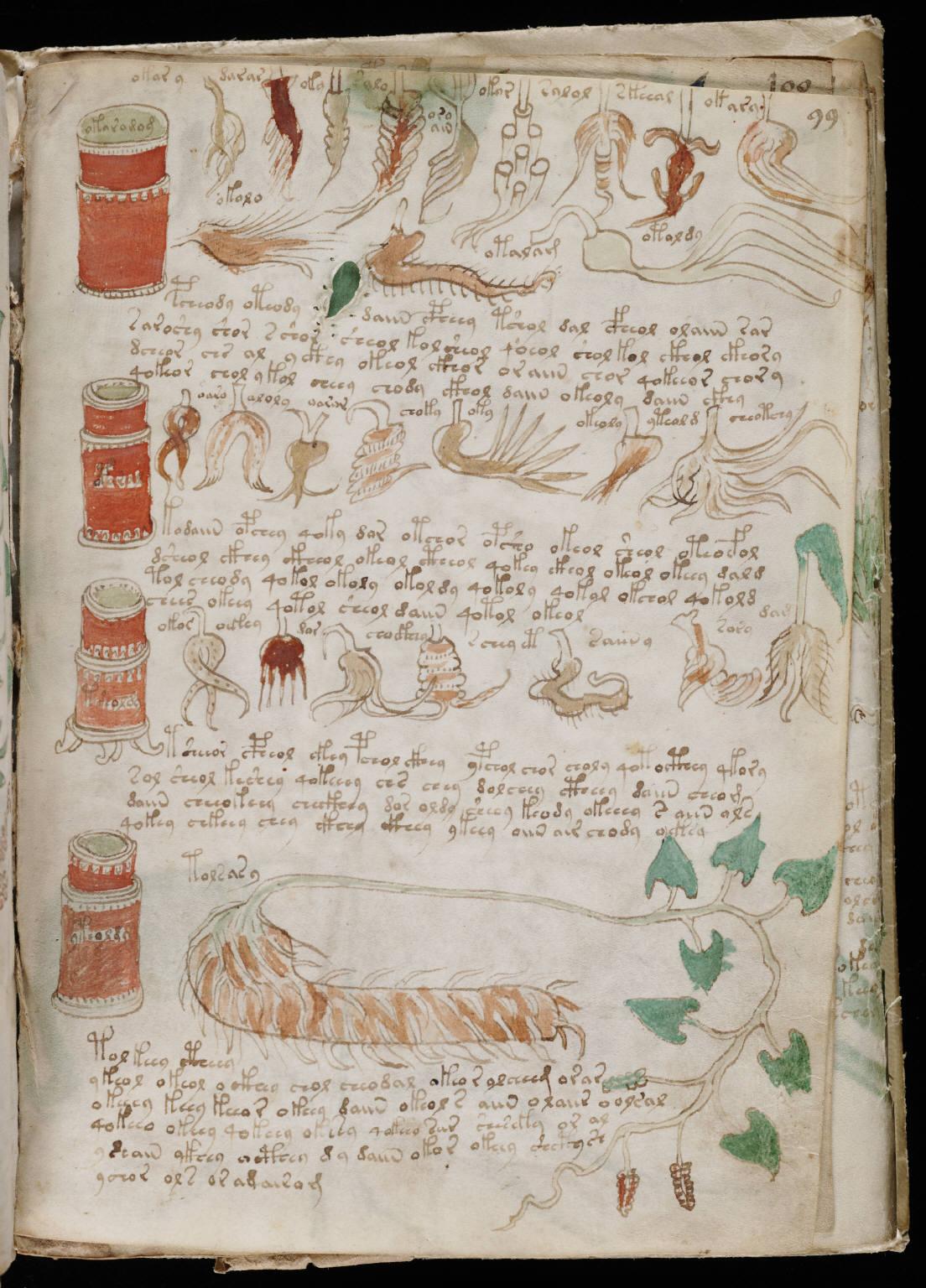 Voynich Manuscript %28175%29 ヴォイニッチ手稿(写本) どの言語にも属さない謎の文字!