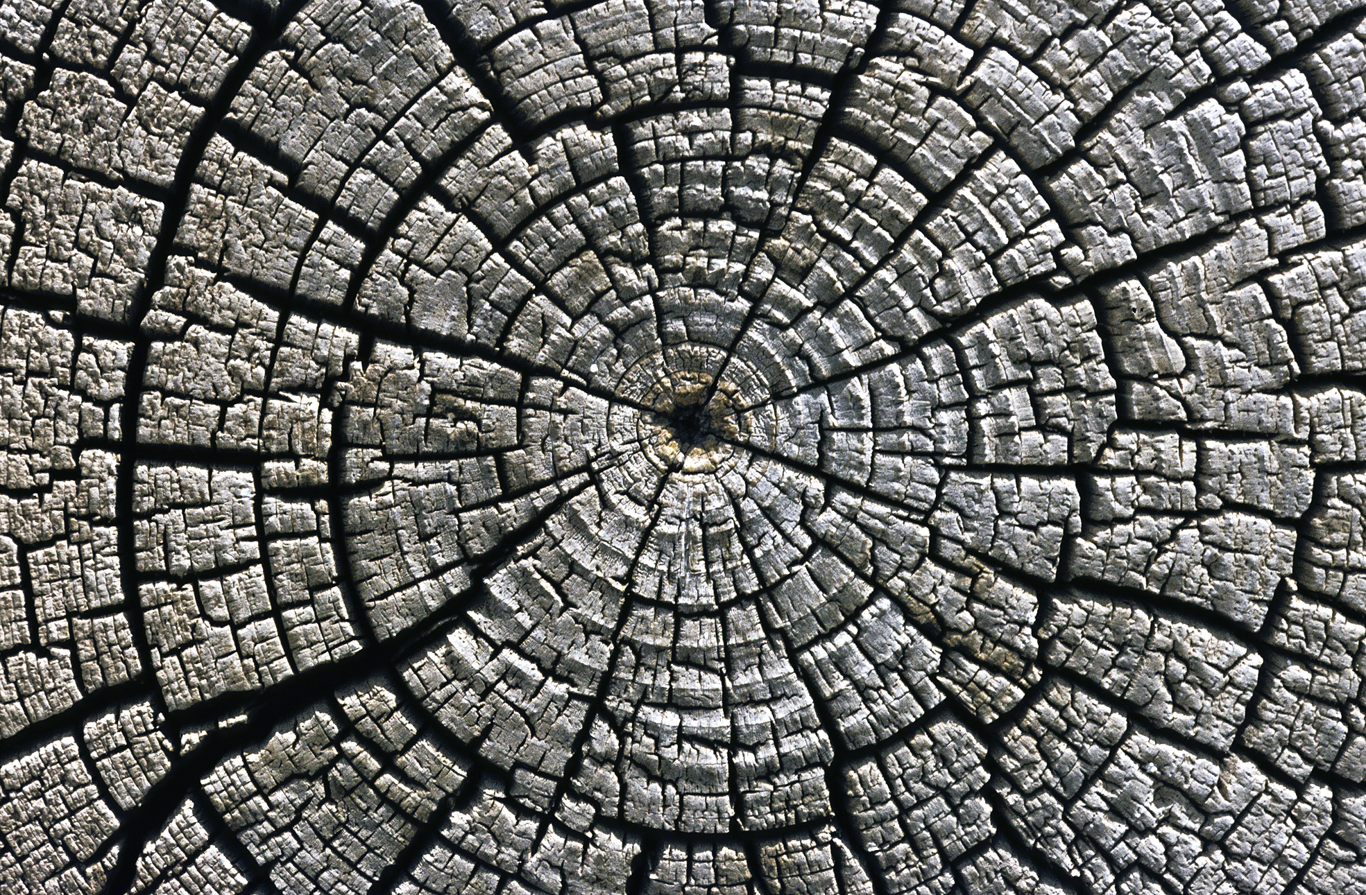 treerings dating method Tree rings are used to calibrate radiocarbon measurements calibration is necessary to account for changes in the global radiocarbon concentration over time.
