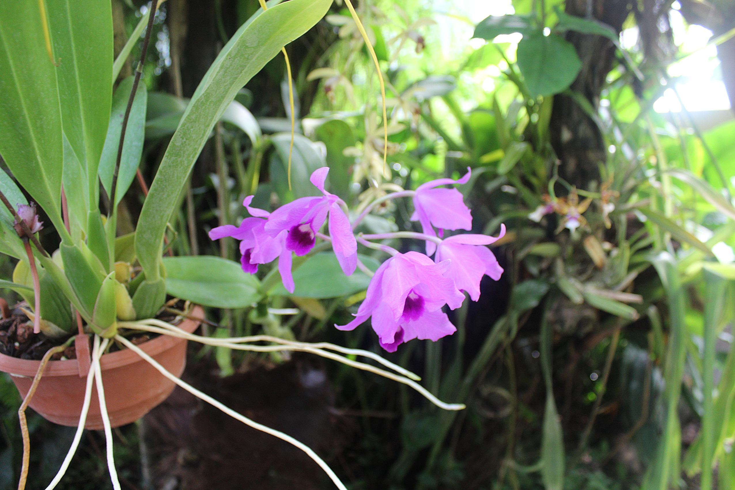 filme o gratis orchide thaimassage