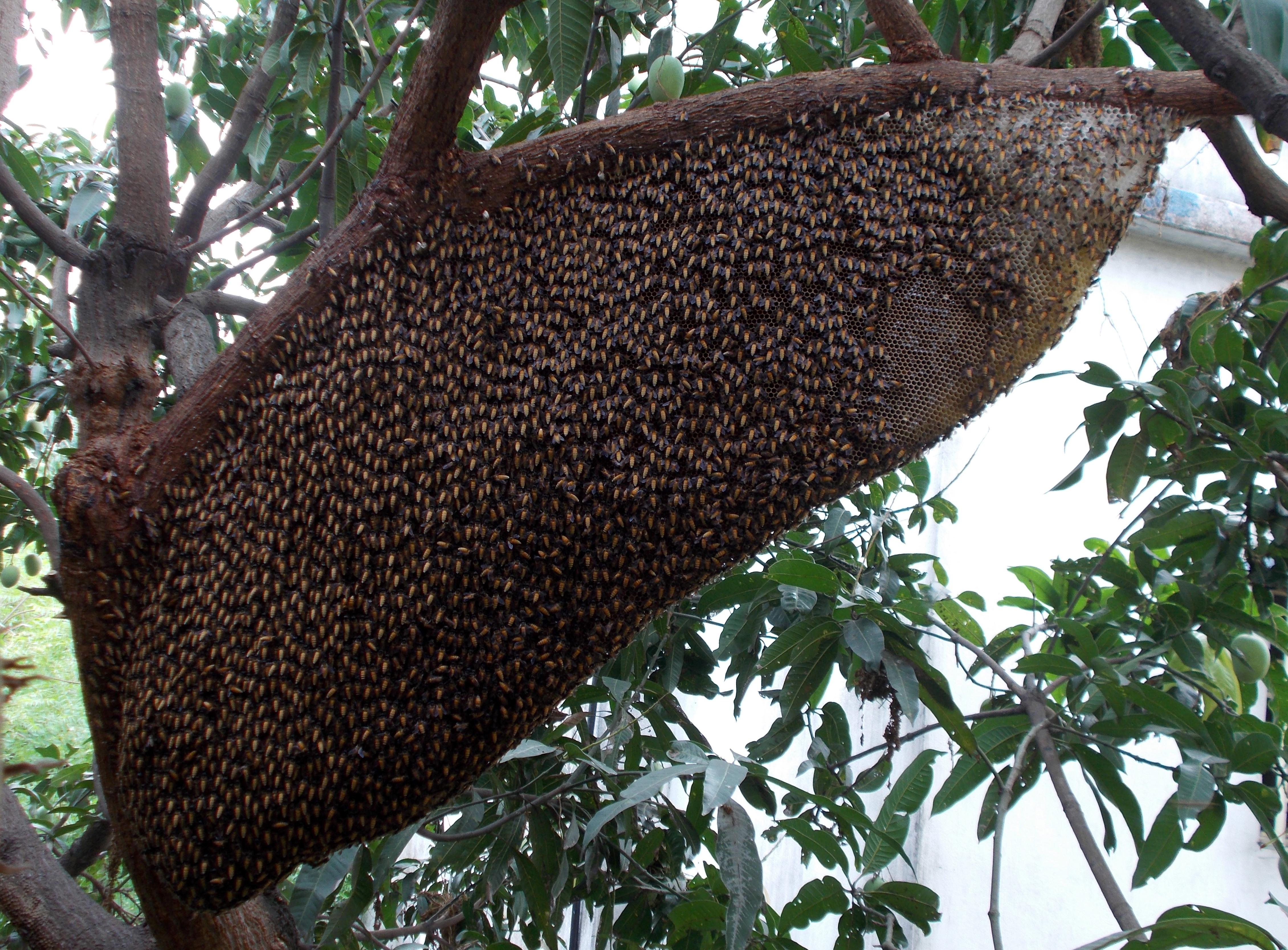 FileA Large HoneycombJPG
