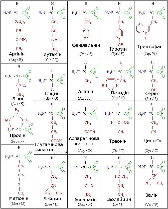 structure of amino acids 20 amino acids pdf