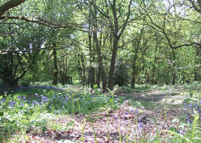 At the woodland edge - geograph.org.uk - 1306608