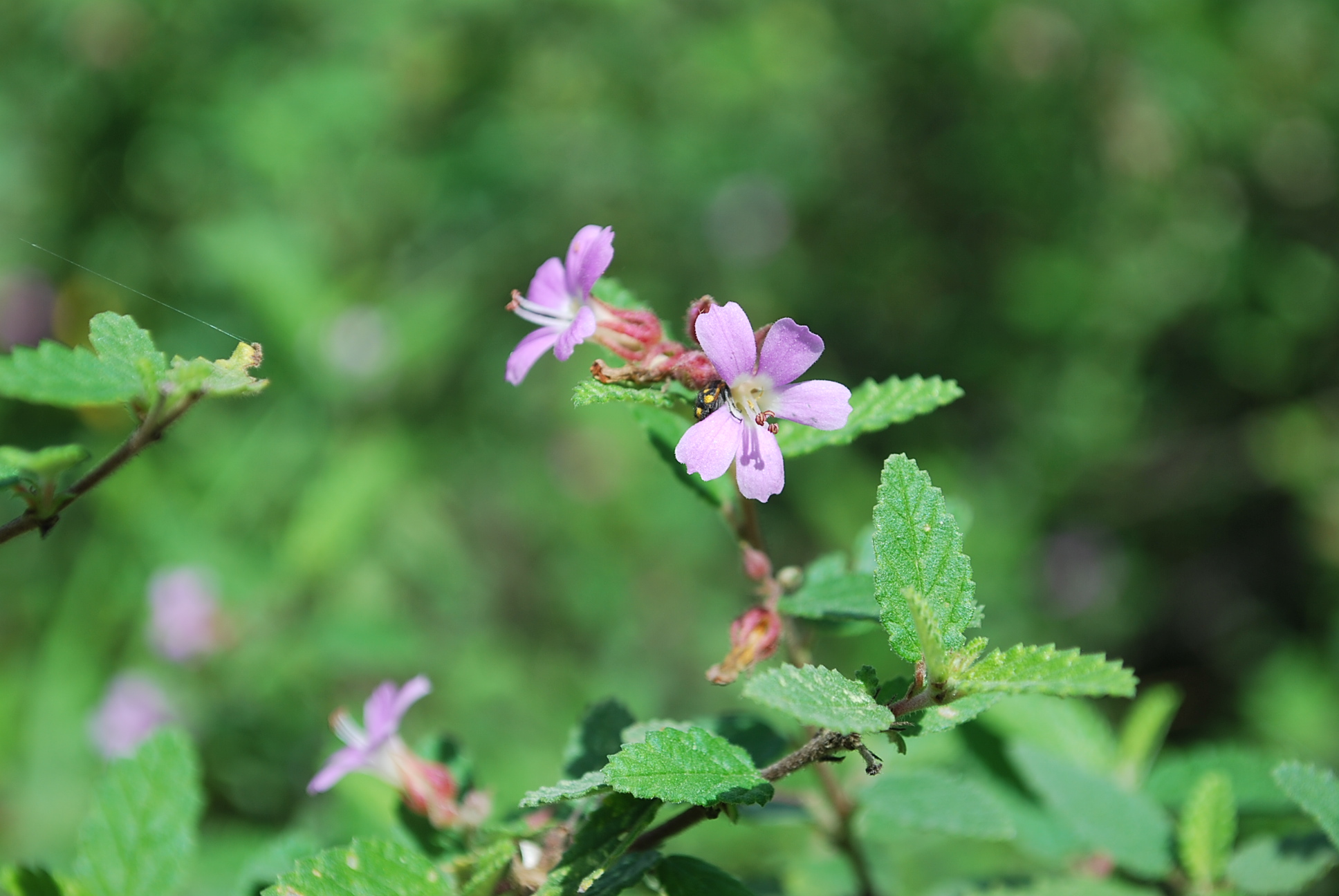 Filebeautiful wild flowersg wikimedia commons filebeautiful wild flowersg izmirmasajfo