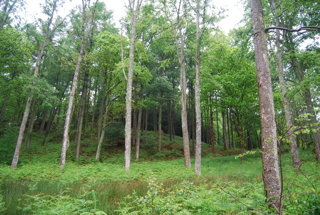 Birk's Coppice - geograph.org.uk - 1336331