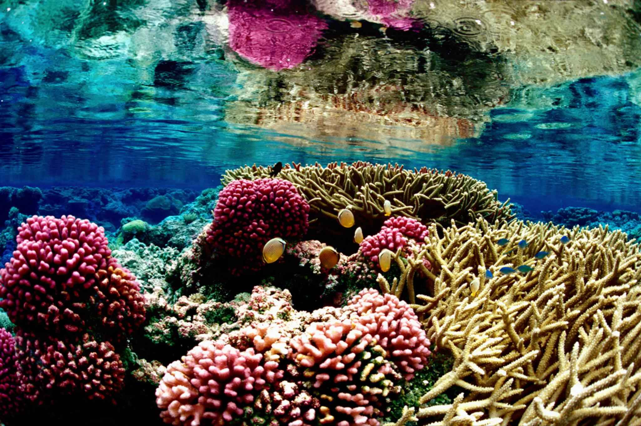 Underwater landscape of coral reef