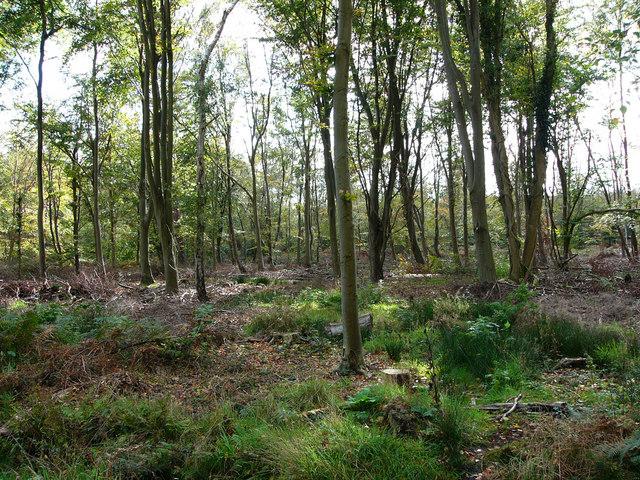 Creech Woods - geograph.org.uk - 1021814