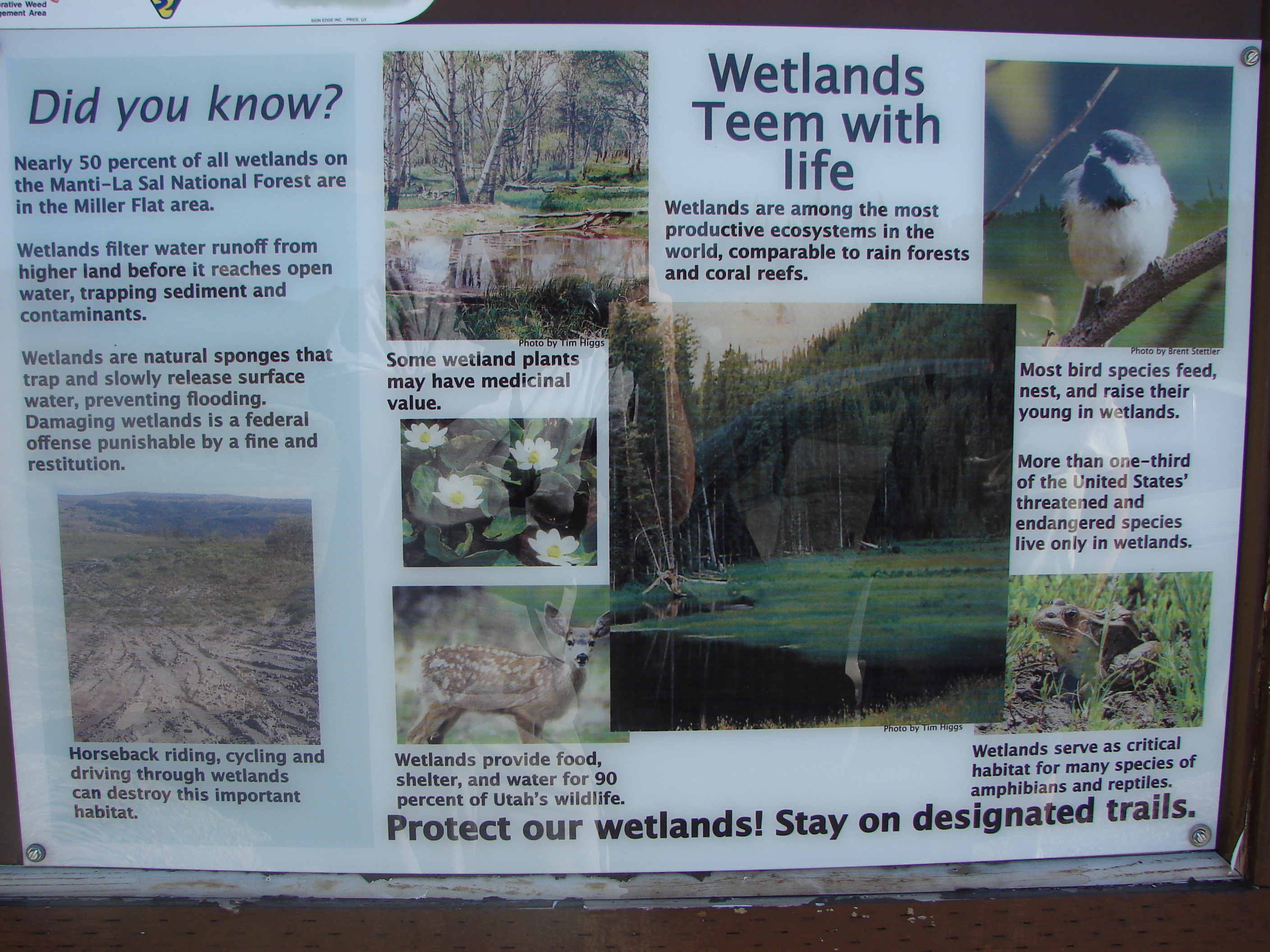 file did you know wetlands team with life sign in scad valley aug
