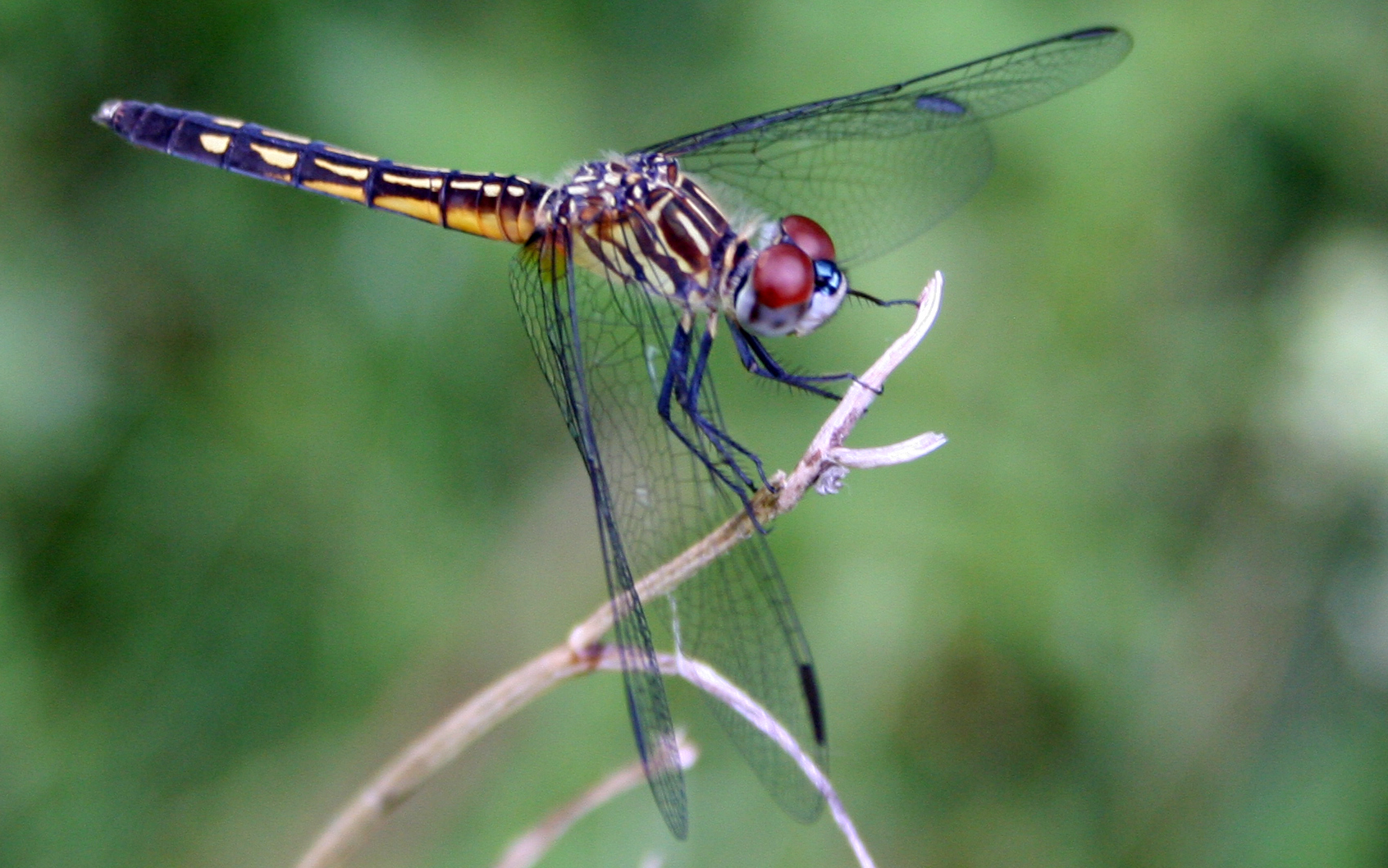 Chapter 11 Dragonfly 2 Anatomy - Lessons - Tes Teach