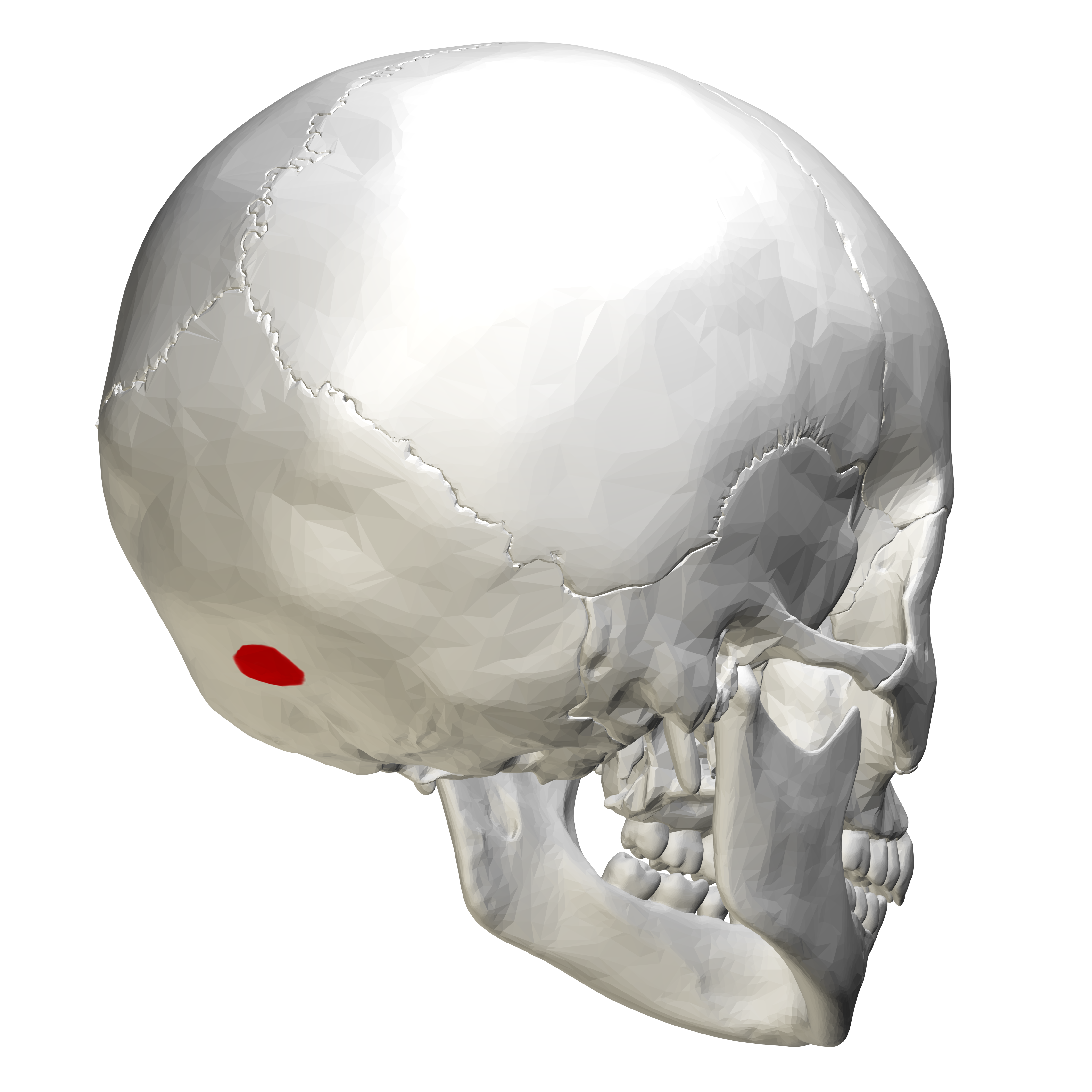 lateral skull base anatomy pdf